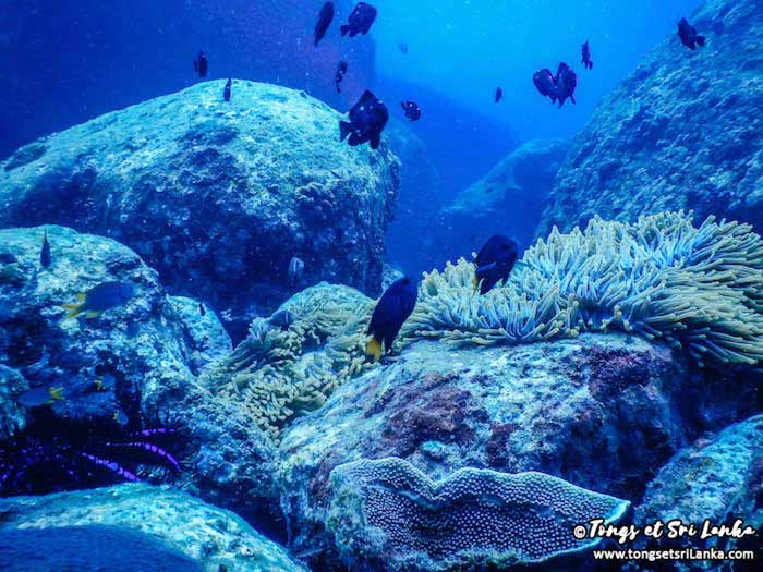 plongée au Sri Lanka