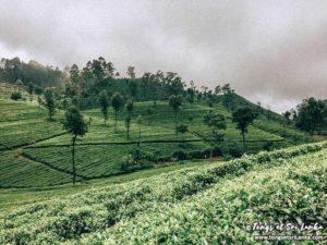Haputale au Sri Lanka