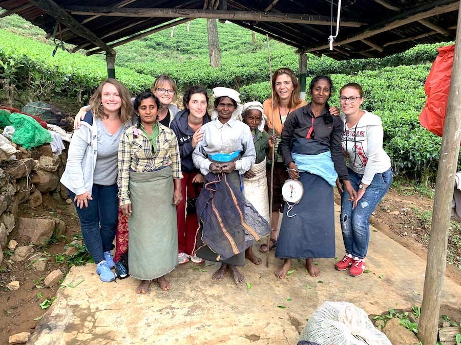 champs de thé sri lanka