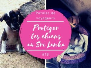 protéger les chiens au sri lanka
