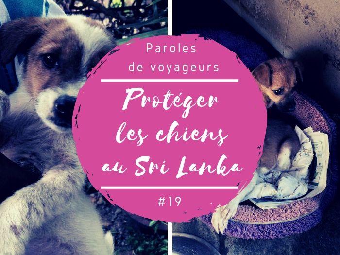 Paroles de voyageurs protéger les chiens au Sri Lanka