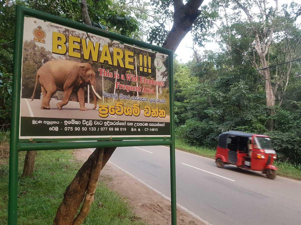 elephant au sri lanka