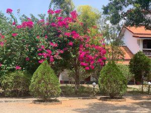 french nature villa sigiriya jardin