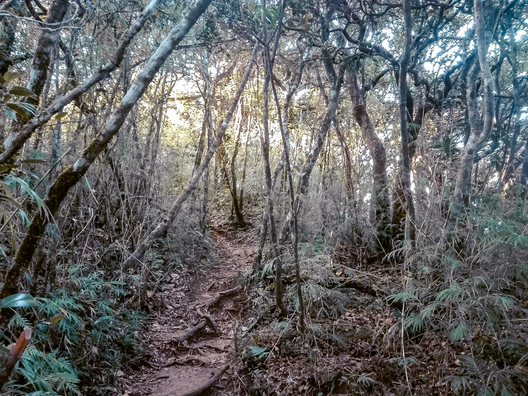 chemin de la montée vers les Knuckles Range