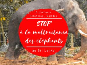 maltraitance des éléphants au sri lanka