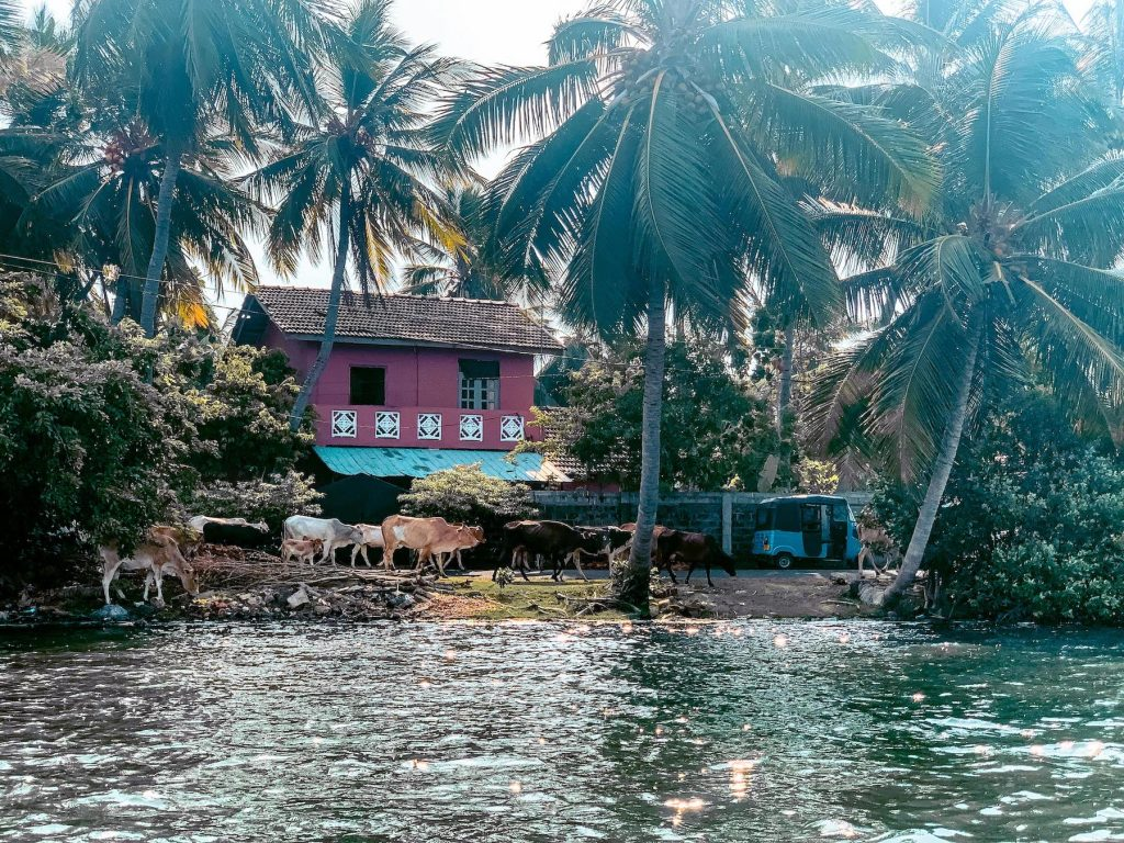 lagune de batticaloa au sri lanka