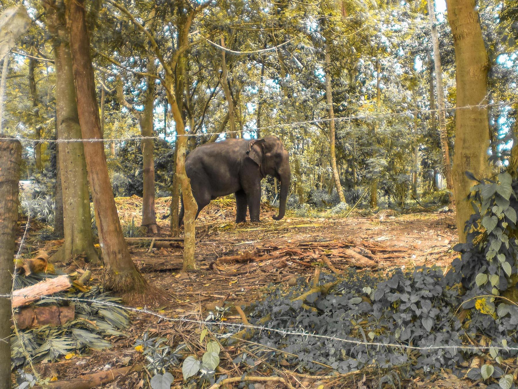 orphelinat des éléphants au sri lanka