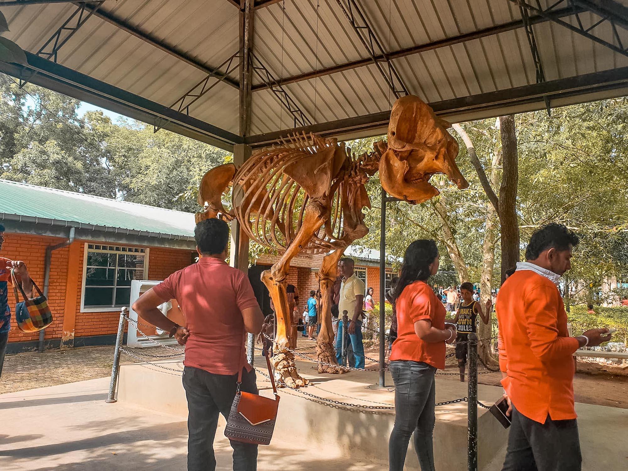 squelette d'éléphant