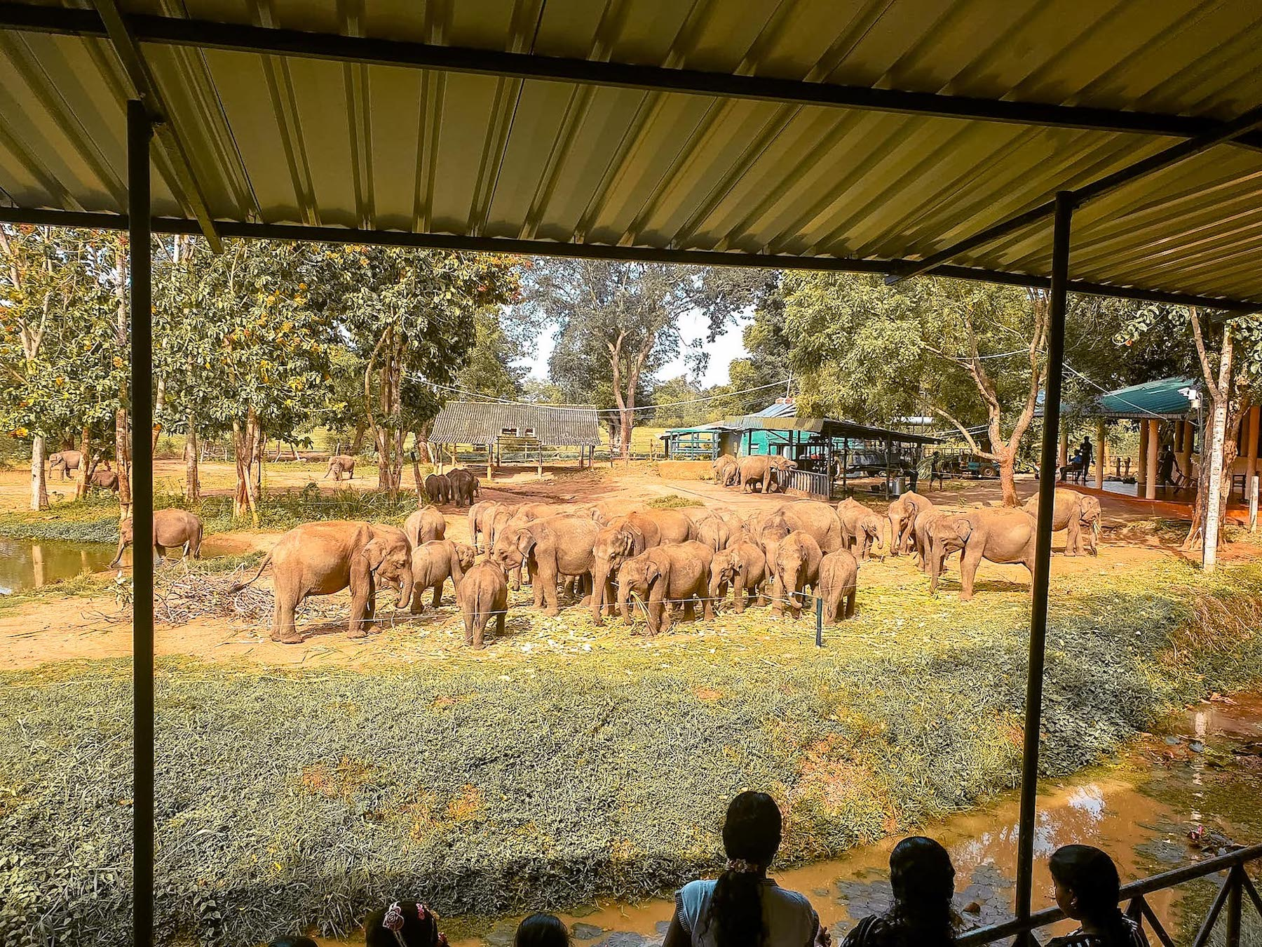 elephant transit home uda walawe