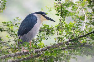 oiseau sri lanka kandy