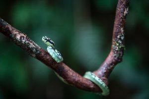 serpent lanka
