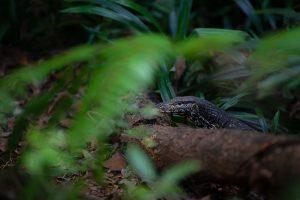 serpent jungle sri lanka