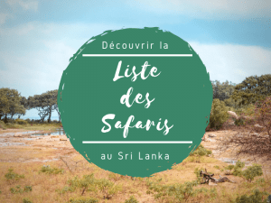 safaris au sri lanka