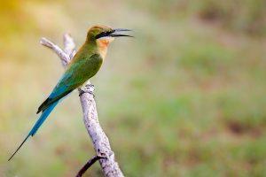 oiseau sri lanka 2