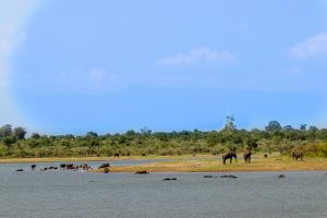 uda walawe paysage sri lanka