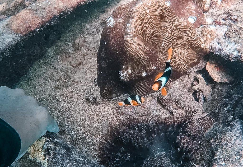 faire de la plongee au sud du sri lanka