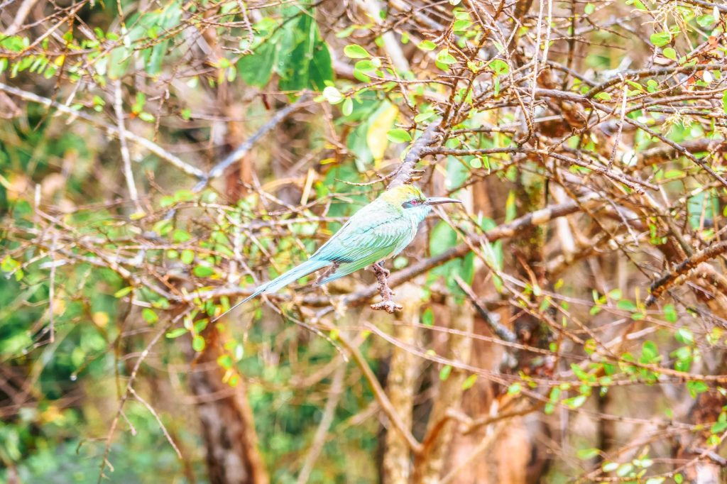 oiseau en safari sri lanka