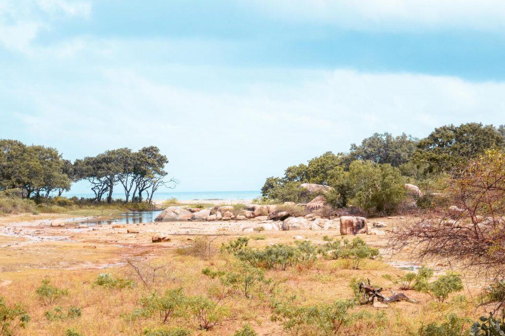paysage à yala