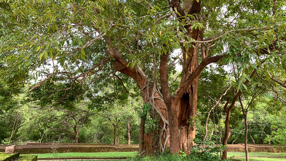 nature polonnaruwa